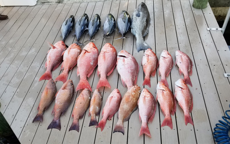 multiple betta fish 3